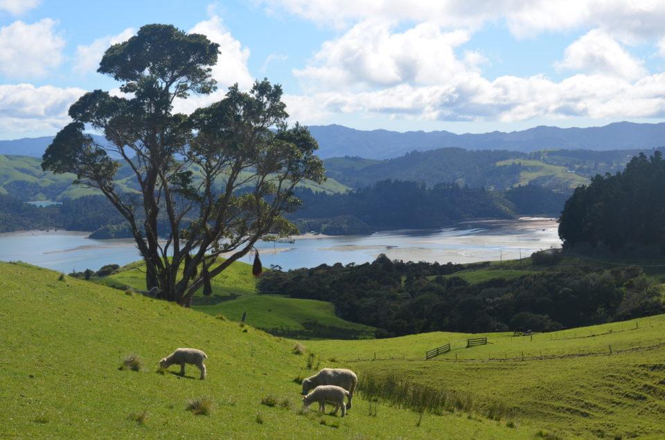 Da das eVisitor Visum Australien die mehrfache Einreise erlaubt, ist ein Abstecher nach Neuseeland kein Problem.