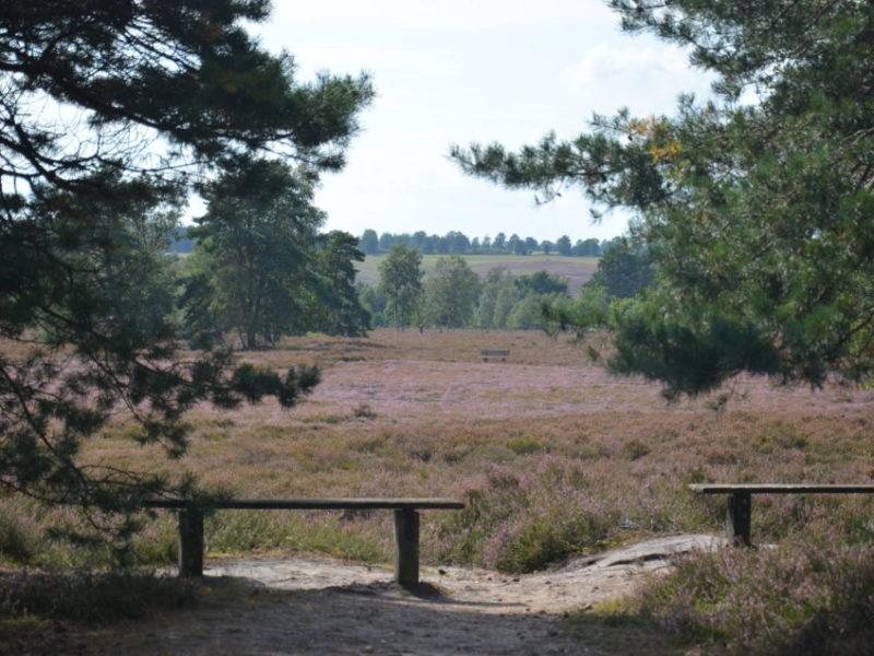 Zu den Lüneburger Heide Ausflugszielen bzw. Sehenswürdigkeiten gehört die Behringer Heide.